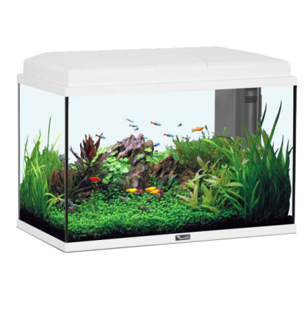 ZOLUX Aquarium Aqua Start 55 LED - 55 L - Blanc