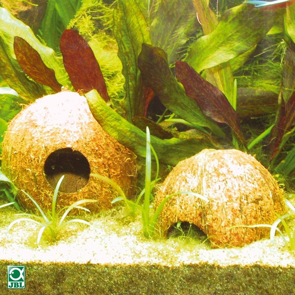 Decoration Aquarium Noix De Coco : Jbl cocos cava l