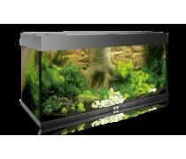 JUWEL Fond de décoration aquarium Root 600x 550mm