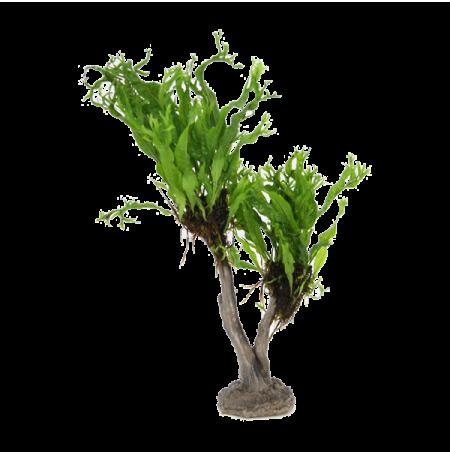 Stoffels microsorum windelov sur arbre bonsai en r sine plante pour aquarium - Bonsai arbre prix ...