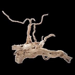 STOFFELS Racine Araignée XS - 10 cm - Racine naturelle pour aquarium