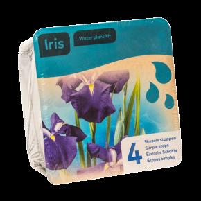 Panier avec 2 plantes précultivées - Iris Bleues - 18x18x12 cm