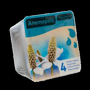 Panier avec 2 plantes précultivées - Anemopsis - 18x18x12 cm