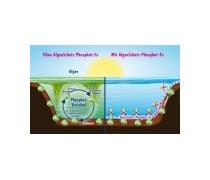 DENNERLE Phosphat-Ex 250g Anti algues