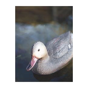 OASE Canard Colvert Femelle Figurine pour Bassin
