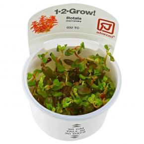 TROPICA Rotala Macrandra, plante en pot pour aquarium