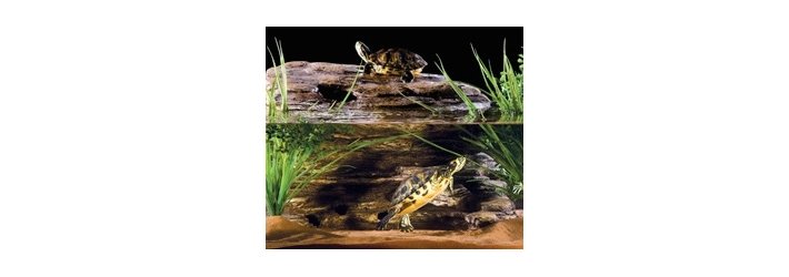 Chauffage pour tortues