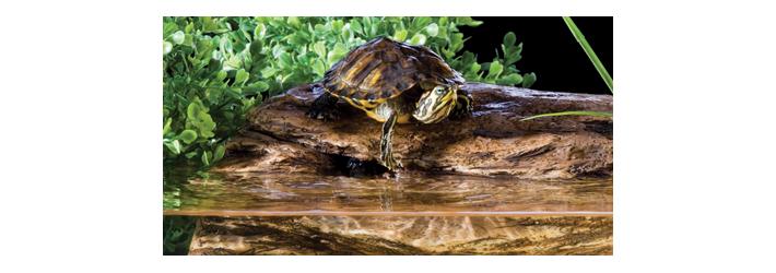 Mat riel tortue aquatique aqua store for Aquarium tortue aquatique