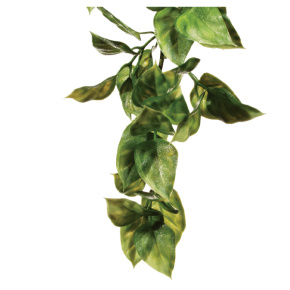 EXO TERRA Amapallo, Plante Artificielle Terrarium - Taille S