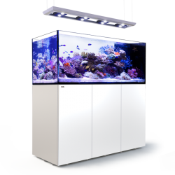RED SEA REEFER Peninsula Deluxe 650 + Meuble - Blanc