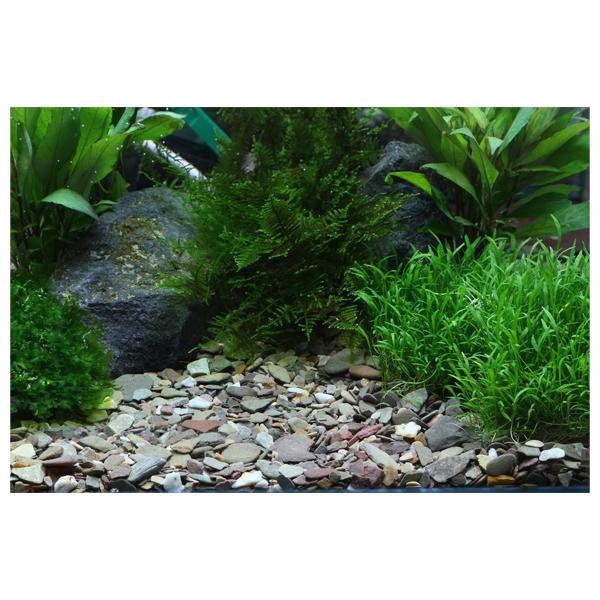 Dennerle gravier plantahunter rio xingu pour aquarium 5 kg for Gravier aquarium