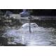 OASE Aquarius Fountain Set 1000 Figure d'eau : Lava
