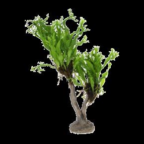Microsorum Windelov sur arbre Bonsai en Résine - Plante pour Aquarium