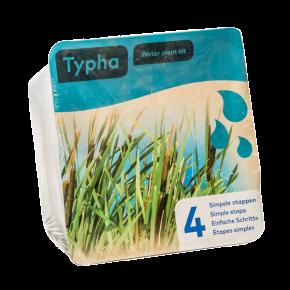 Panier avec 2 plantes précultivées - Typha - 18x18x12 cm