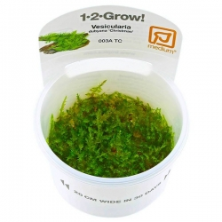 Littorella uniflora - Plante en Pot In Vitro pour Aquarium