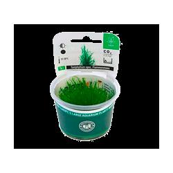 Plantes aquatiques pour aquarium