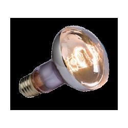 Lampe Terrarium