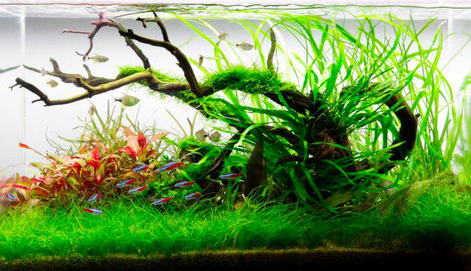 Un aquarium dont l'entretien est régulier reste sain et esthétique