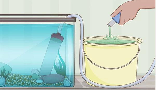 L'entretien d'un aquarium doit être régulier et méthodique