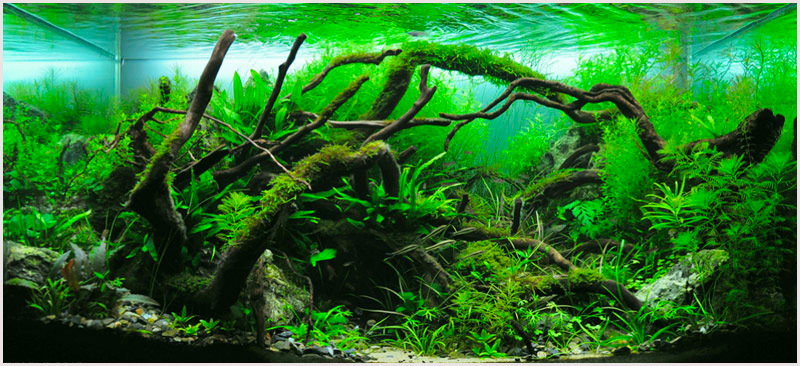 Comment installer des plantes d'aquarium