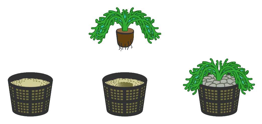 Comment planter des plantes aquatiques dans un bassin?