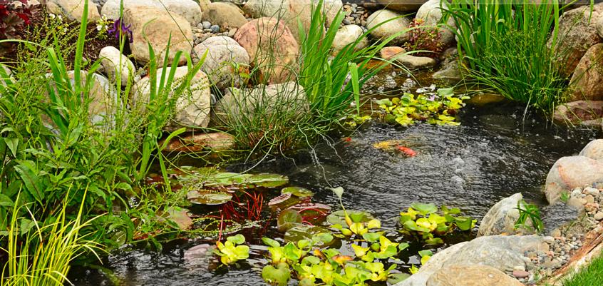 Bassin décoré avec des plantes aquatiques