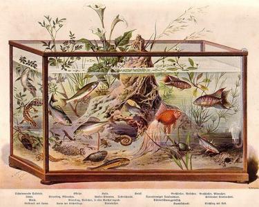 Les premiers aquariums avec chauffage