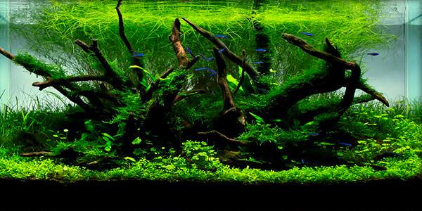 Réussir son aquarium planté grâce à l'installation d'un kit CO2