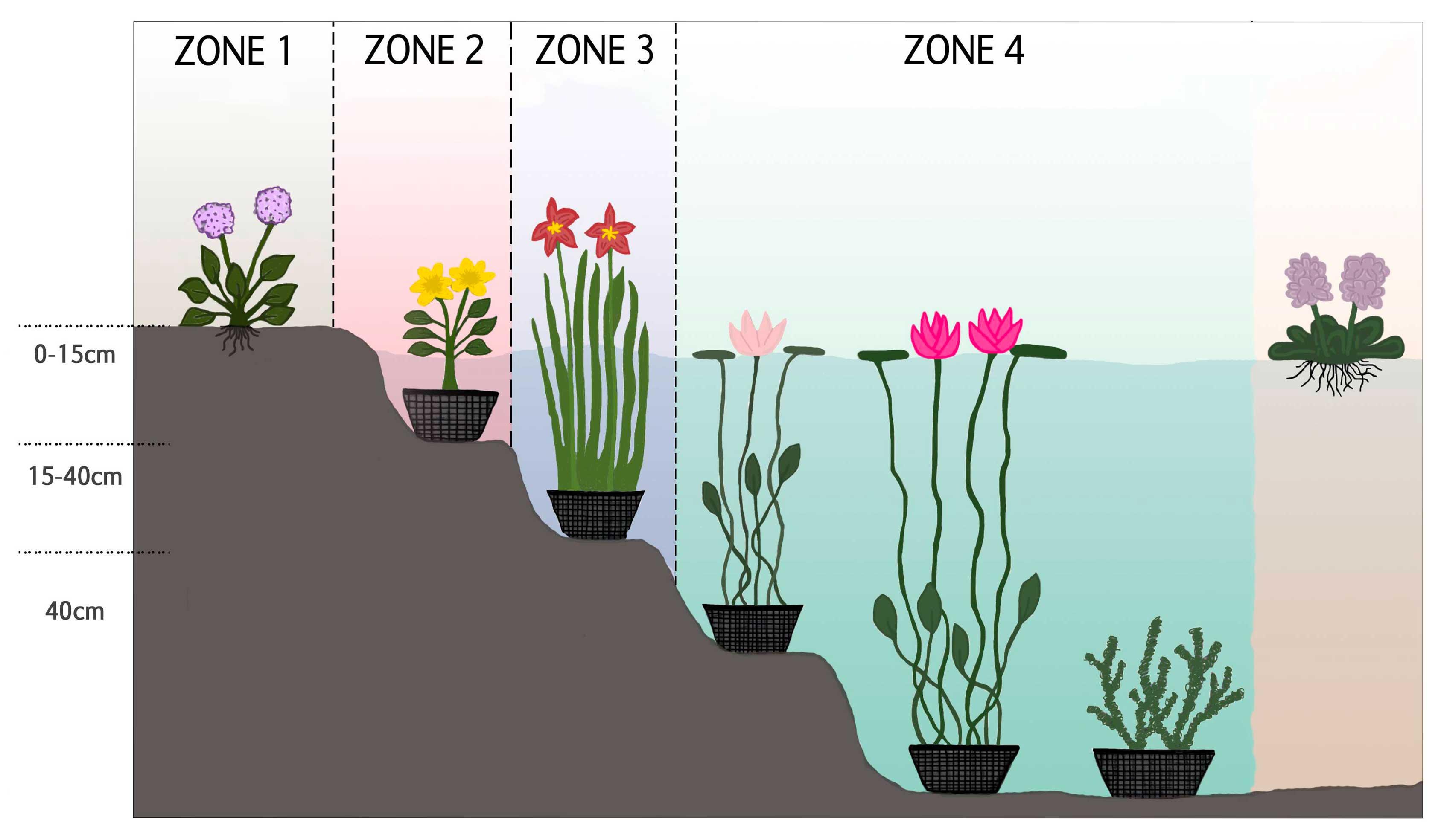 Découvrez les zones de plantation pour chaque type de plante de bassin